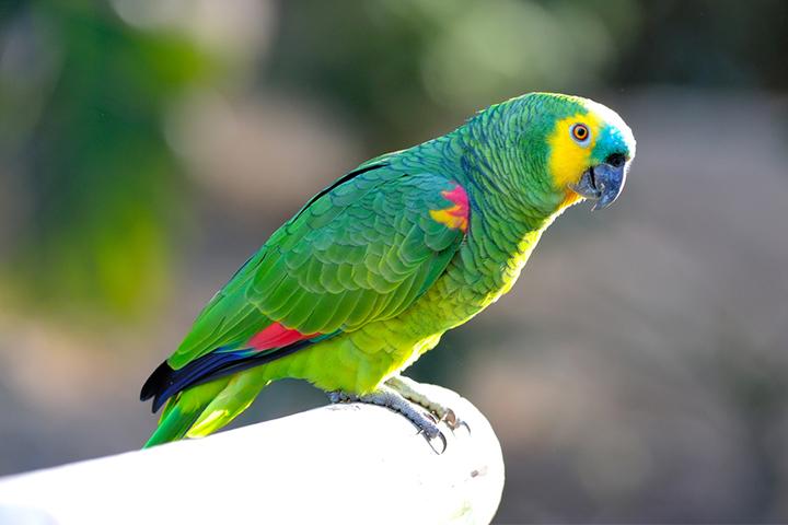 Houders van Dieren - Vogels