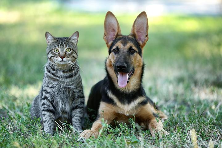 Houders van Dieren - Honden en Katten