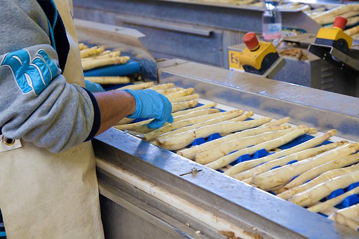 Kwaliteitseisen van asperges