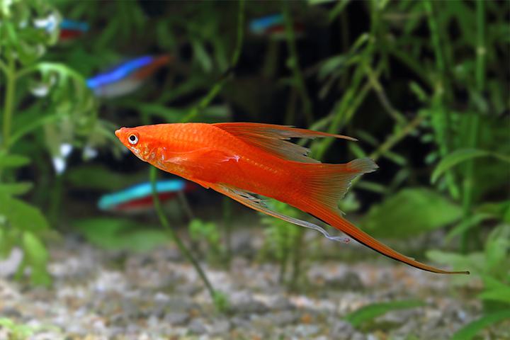 Houders van Dieren - Vissen