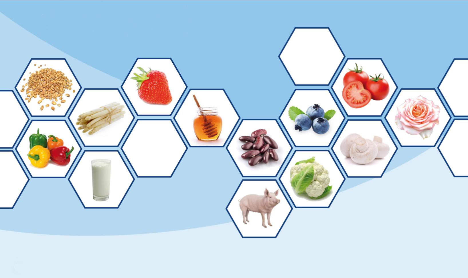 Foodquiz Typisch regionale producten